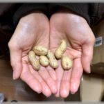 豆まき 神聖な豆