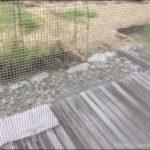 きれいに洗った網戸越しに庭を写した写真です。