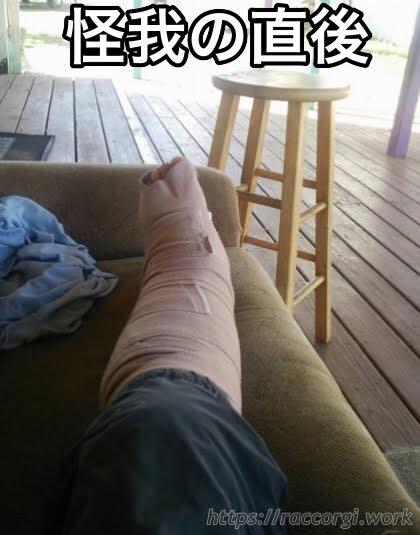 こーぎーが脚を怪我した直後の様子です。