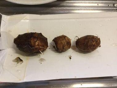 里芋を節ごとに切り分けた様子です。