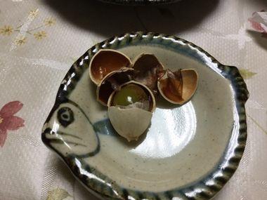 殻を剥いている銀杏です。