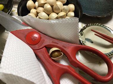 銀杏の殻をはさみで割ろうとしています。