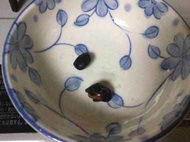茹でかけの黒豆です。