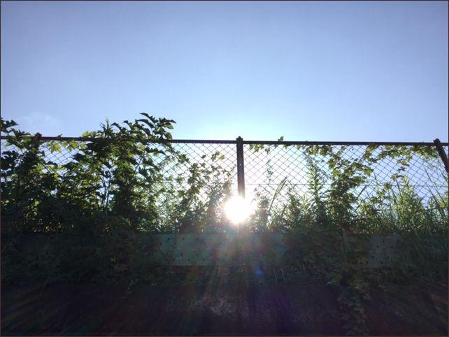 太陽の写真です。