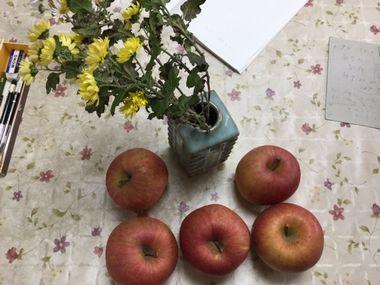 庭から取ってきた小菊とりんごです。