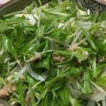 緑色のサラダです。水菜