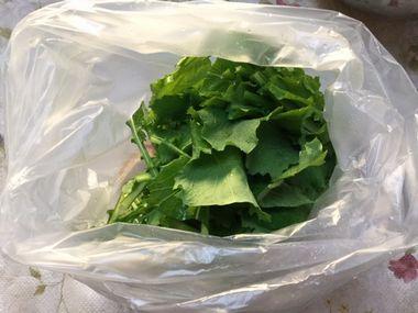 ビニール袋に入ったカブの葉っぱです。