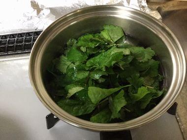 みつ葉をお湯に入れたところです。