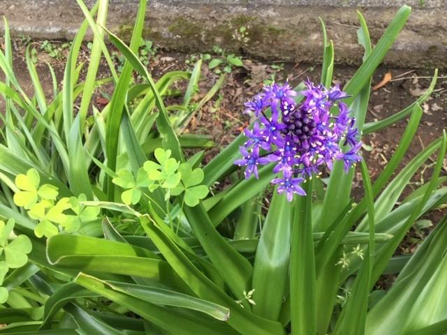 庭に咲いた花です。5月