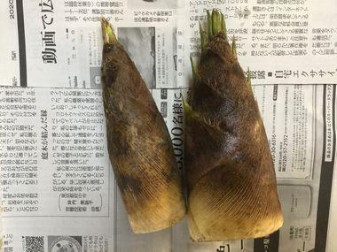 2本で260円のタケノコです。