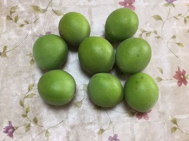 らっこがもいだ梅の実です。