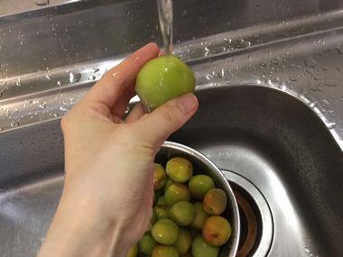 梅を流水で洗っているところです。