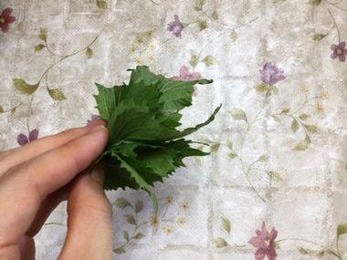 庭で摘んだ紫蘇の葉です。