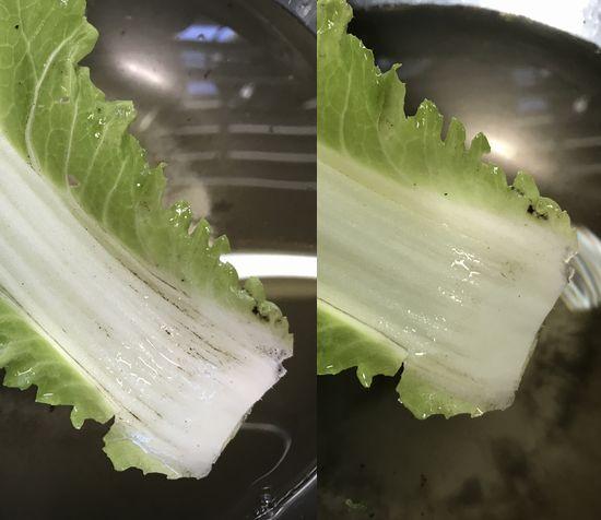 歯ブラシで洗った白菜。